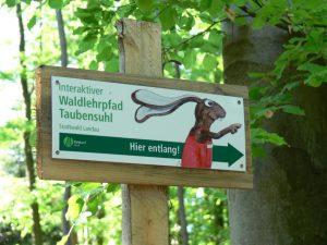 Im Waldlehrpfad Taubensuhl. Marlin Frank, Bildarchiv Südliche Weinstrasse e.V.